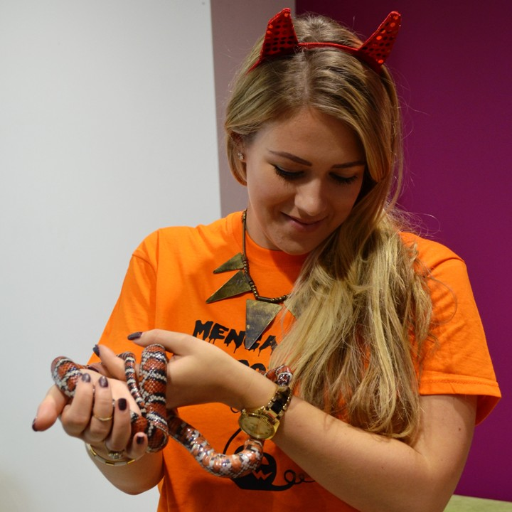 [Reptile & Minibeasts Encounters for Charities - Meet The Beasts]