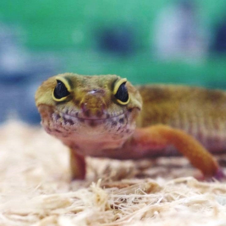 [Reptiles & Minibeasts Bringing Science Topics to Life in Primary Schools & Academies - Meet The Beasts]